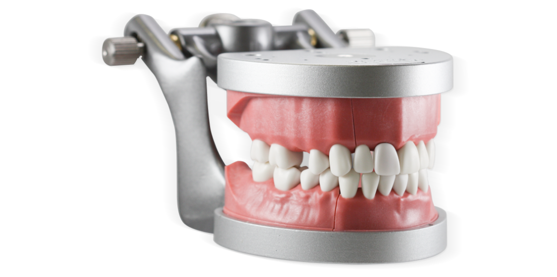 ModuPRO Pros M200 ADEX typodont/dentoform in articulator for CDCA practice and preparation.